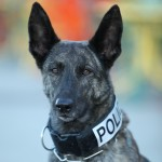 A Member of the K9 Unit